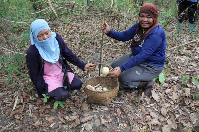 คนเก็บของป่าต้องระวัง!! มูลนิธิพัฒนาภาคเหนือ แฉหาก ร่างพรบ.อุทยานฯ บังคับใช้ เข้าป่าเก็บเห็ด-หน่อไม้ โดนปรับ 5 แสน คุก 5 ปี